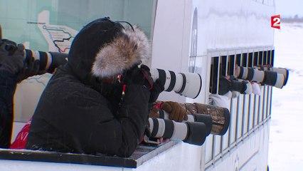 Canada : Churchill, dernier stop pour les ours polaires avant la banquise