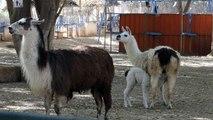 Novos moradores do zoo