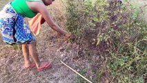 Brave Girl Catch Village Snake in My Village How To Catch Village Snake In My Village