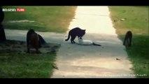 Çılgına Dönen Hayvanlar _ Şok Ve Dehşet (Türkçe Belgesel)