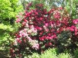 Vincennes-Parc Floral (4)
