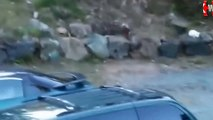 Animals Attacks Fails   Wild animals hunting dog  Pit bull vs Bear  Leopard attack guard dogs  Mountain lion vs dog