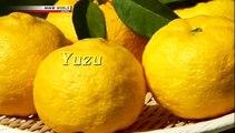 Another... YUZU! - Trails to Tsukiji - YUZU (NHK WORLD TV)