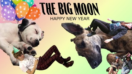 The Big Moon - Happy New Year
