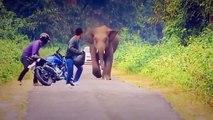 Os ataque de animais selvagens Pessoas sendo atacada por animais