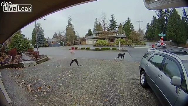 Nanny Runs Down Package Thief After Getaway Car Takes Off  Read