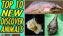 TOP 10 Newest Discovered Animal Species