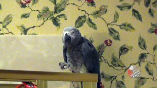 Parrot has new solution to the question as to why did the ch