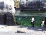 Vincennes-Zoo-Otaries et phoques (2)