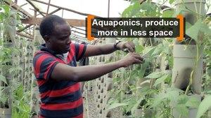 Kenya: Aquaponics, produce more in less space