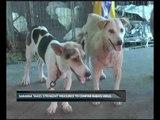Sarawak takes stringent measures to confine rabies virus