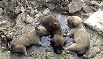 Sauvetages de bébés chiens coincés dans du Mazout pendant des heures !