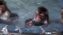 三井由美 温泉に入る猿 by三井由美
