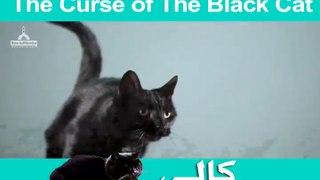 The Curse Of The Black Cat _ Imran Attari Madani Channel