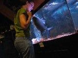 Elle fait un calin à son gros poisson Pacu... Animal de compagnie insolite