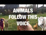 This Lady's Voice Attracts All Kinds of Animals