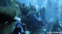 Incredible diving with shark Dive in Roatan Honduras bay islands