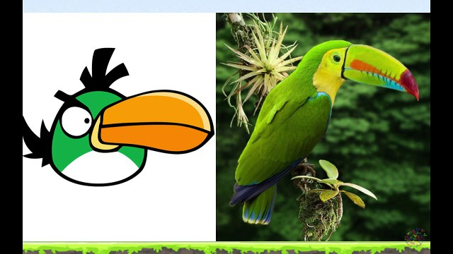 Angry Birds In Real Life - Angry Birds En La Vida Real - Angry Birds Transform into real-jvvQEKxPVo8