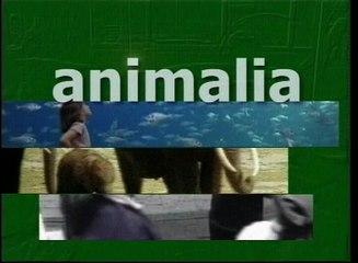 wildlife animals of forest.