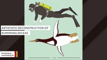 Fossil Reveals Human-Sized Penguin Once Roamed New Zealand