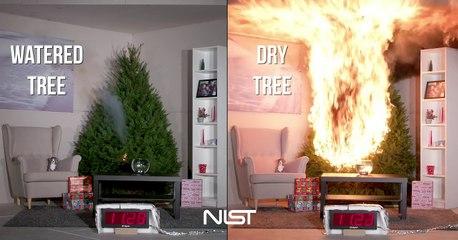 Watered Tree vs. Dry Tree : Don't joke at Christmas!