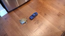 Tortoise chasing toy truck -Animal chasing toy truck Whatsapp Funny Video