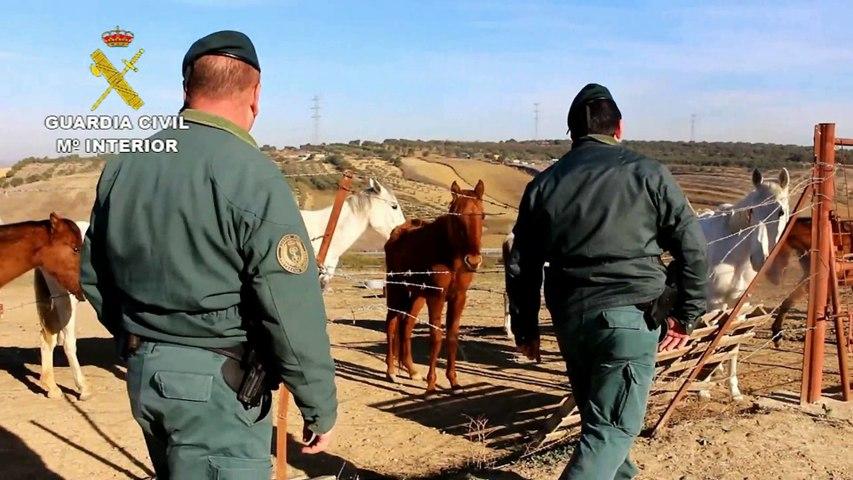 Maltrato animal: Hallan una docena de CABALLOS famélicos y abandonados en Huelva