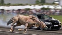 Caballos vs autos | Carreras de Caballos