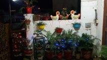 Happy Diwali _ Happy Diwali to all my Friends _ Fun Gardening-cCbs-QG61wM