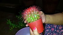 How to Repot Cactus Plant _ Cactus Plant  _ Fun Gardening _ 10 Nov, 2017-yqSMWlgSYaw