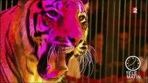 Paris bannit les cirques avec des animaux sauvages