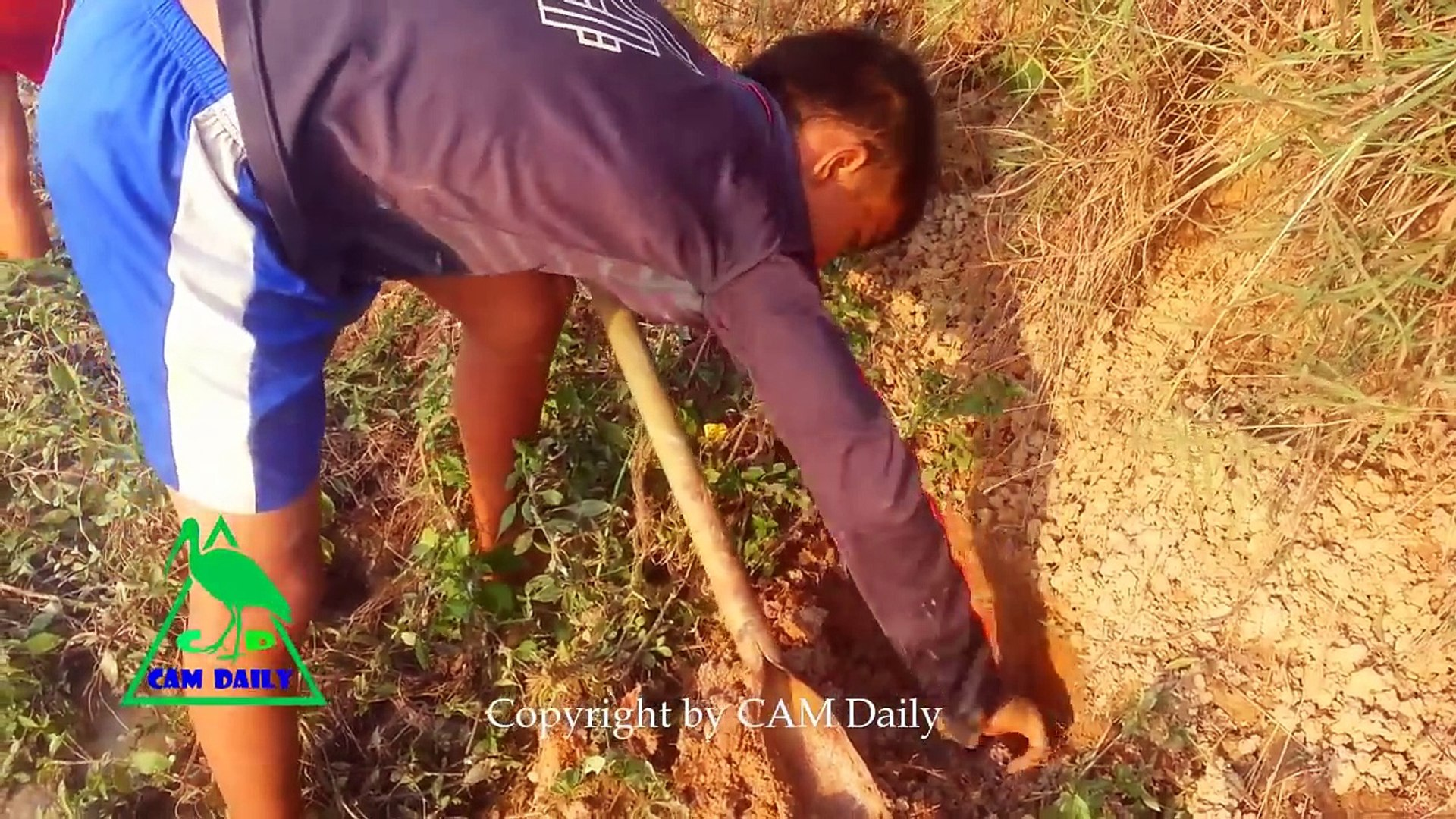 Wow! Amazing Incredible Children Find And Catch Snake In Hole -How to Catch Water Snake in Cambodia