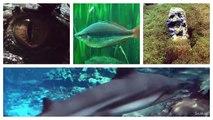 [HD] OMG... What an Arowana pond _ Arowana Teich @ Tierpark Bochum [13_26]-pRLKgzALya0