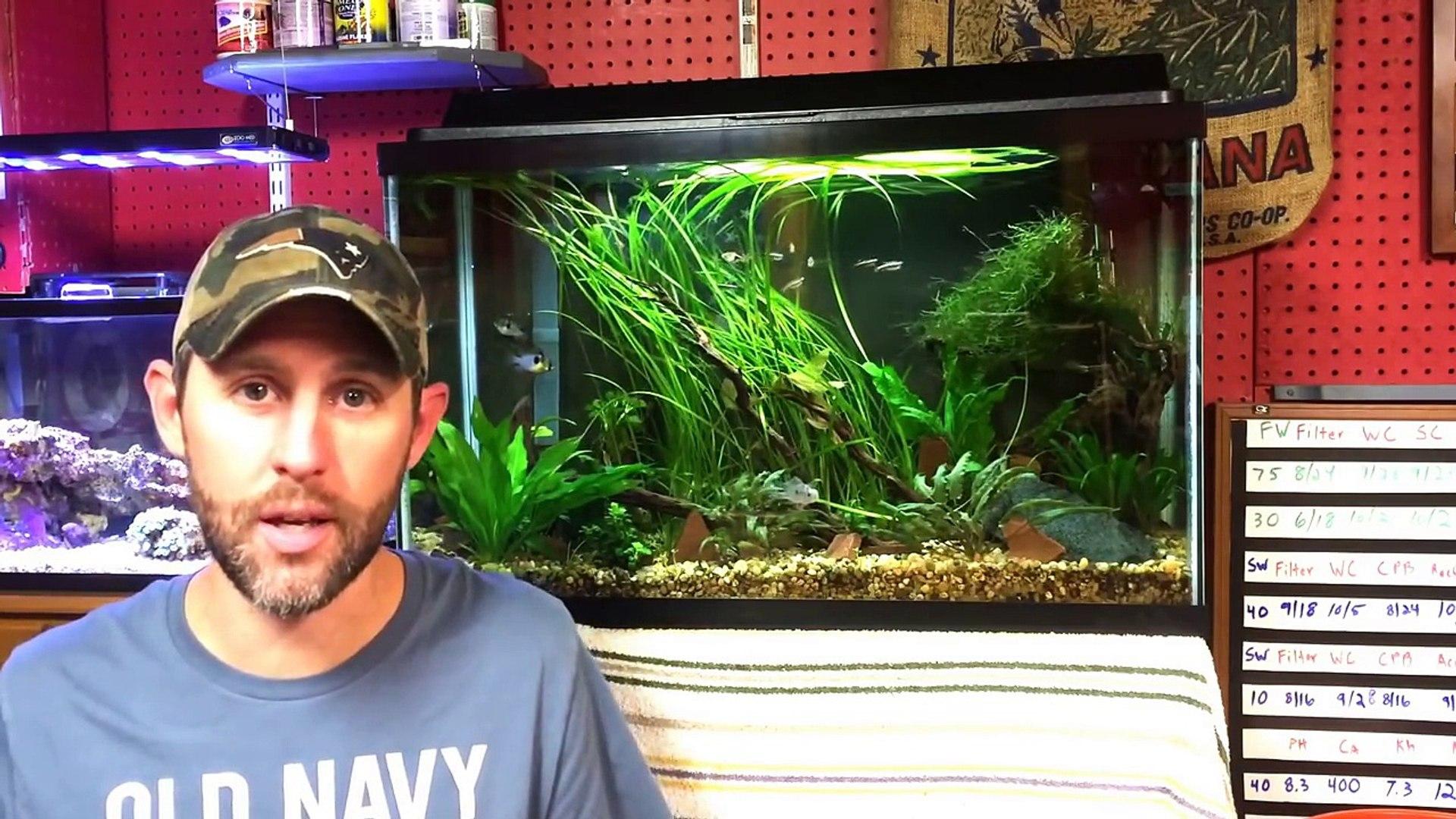 5 Aquarium Plants for Beginners - Part 2. Java Fern, Java Moss, Anubias, Dwarf Sag & Water Sprit