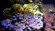 How to Dip Corals  - 10 gallon Reef, dipping Zoanthids to prevent nasties in your tank-4X18Azsn1t8