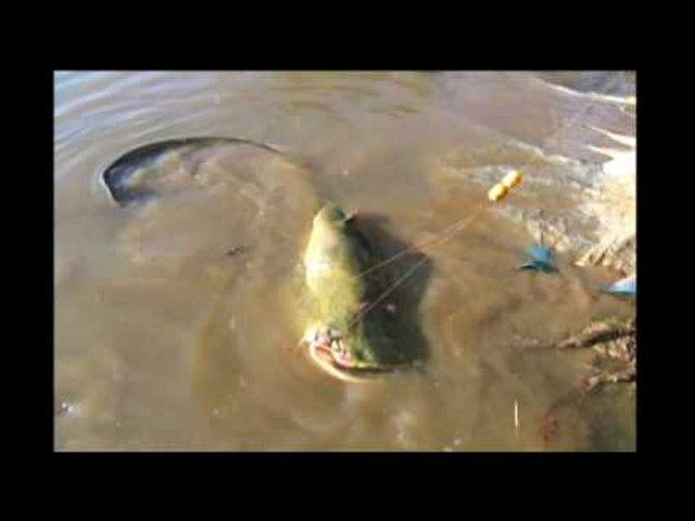 British girl's world record fish