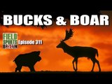 Fieldsports Britain - Bucks & Boar