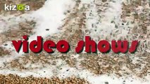 Kizoa-Movie-Video-Slideshow-Maker_-Valy-Gonjeshkake-OFFICIAL-TRACK-Kizoa van Mahdi Entezary Video shows