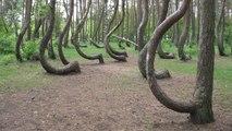 La mystérieuse Forêt tordue (Une histoire sur Terre)