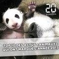 Top 10 des actus « animaux » qui ont marqué l'année 2017