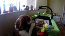 Ce chien adorable donne ses jouets au bébé de la famille... Trop mignon
