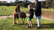 Kangaroo punches boy in the face in wildlife park