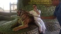 Tiger is repeatedly poked by Thai zoo staff in front of tourists