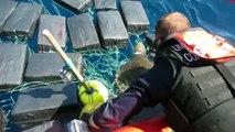Sauvetage d'une tortue au milieu de 7 tonnes de cocaïne par les gardes côtes !