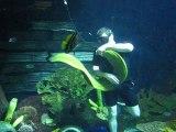 Ce plongeur a pour animal de compagnie une énorme murène...