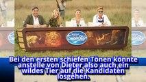 Gefährlichste Show ever! DSDS-Recall im Busch mit Wildtieren-p9iYEoeKCII