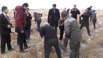 Karaman'da Denetimli Serbestlik Hükümlüleri Fidan Dikti