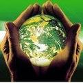 Parede verde traz benefícios para construções