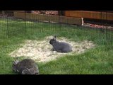 Excitable Bunny Hops Around Garden