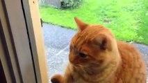 ドアの「ピンポン」を鳴らしてくる猫www早くドアを開けて。ピンポン♪